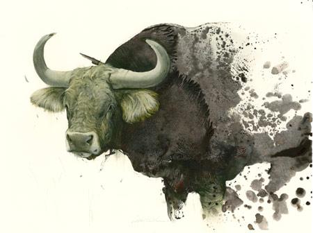 sam-webber-bull