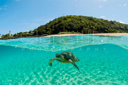 turtle-photo
