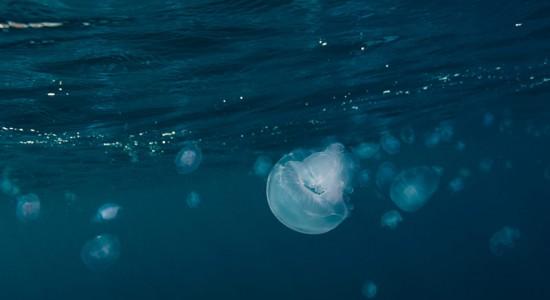 Yuzuru Masuda underwater photography